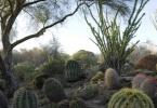 LivingDesert_Palm Desert_Cactus_1
